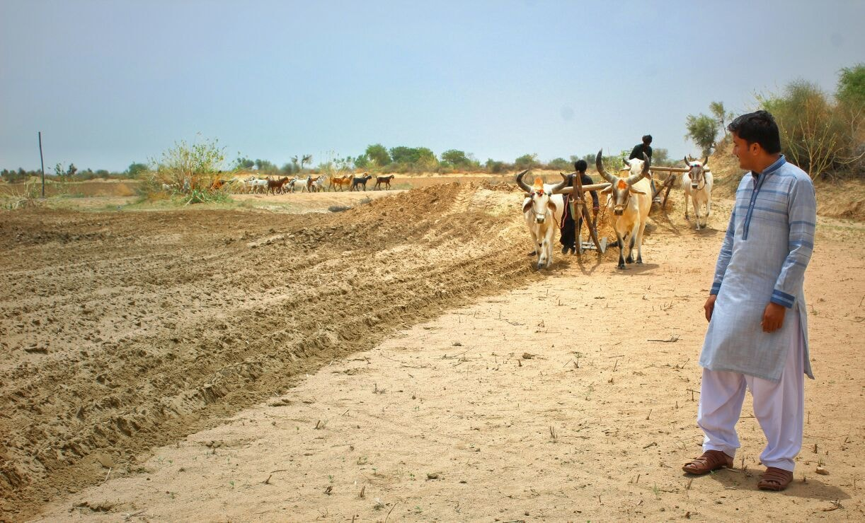 Environmentalist Noor Ahmed Janjhi says that Thar still needed three or four spells of good rainfalls with the intervals of 10 to 15 days for getting crop yield and fodder for the livestock.