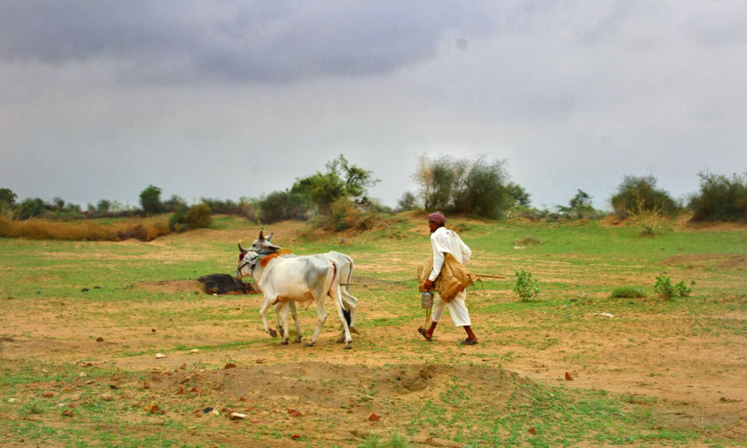 Crops and livestock are the mainstays of the economy of Tharis.