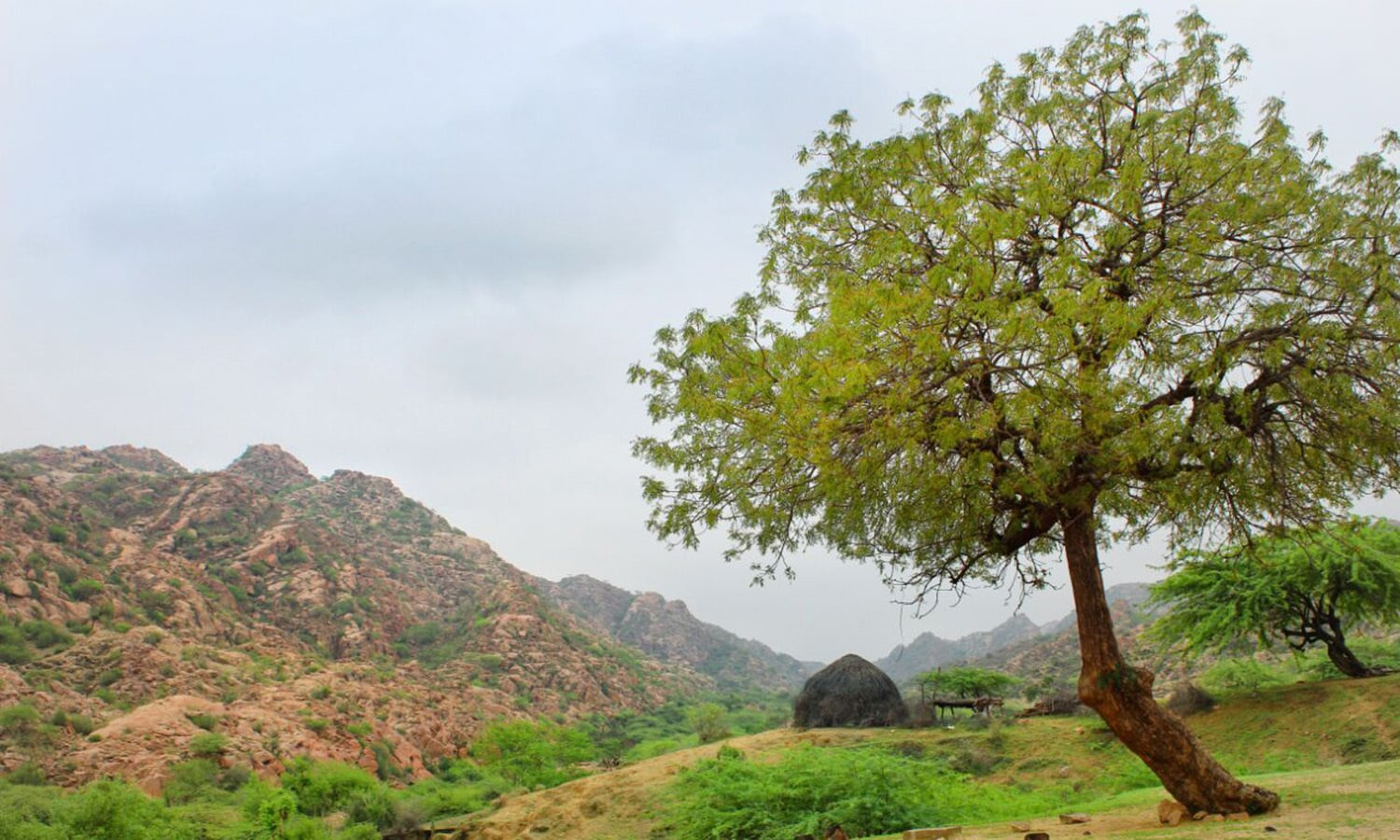 Tharis, who rejoiced at the heavy rainfall that came after a long dry spell this year, have thronged various picnic points of the desert region to enjoy the pleasant weather and captivating natural beauty unveiled by the continuous downpour.