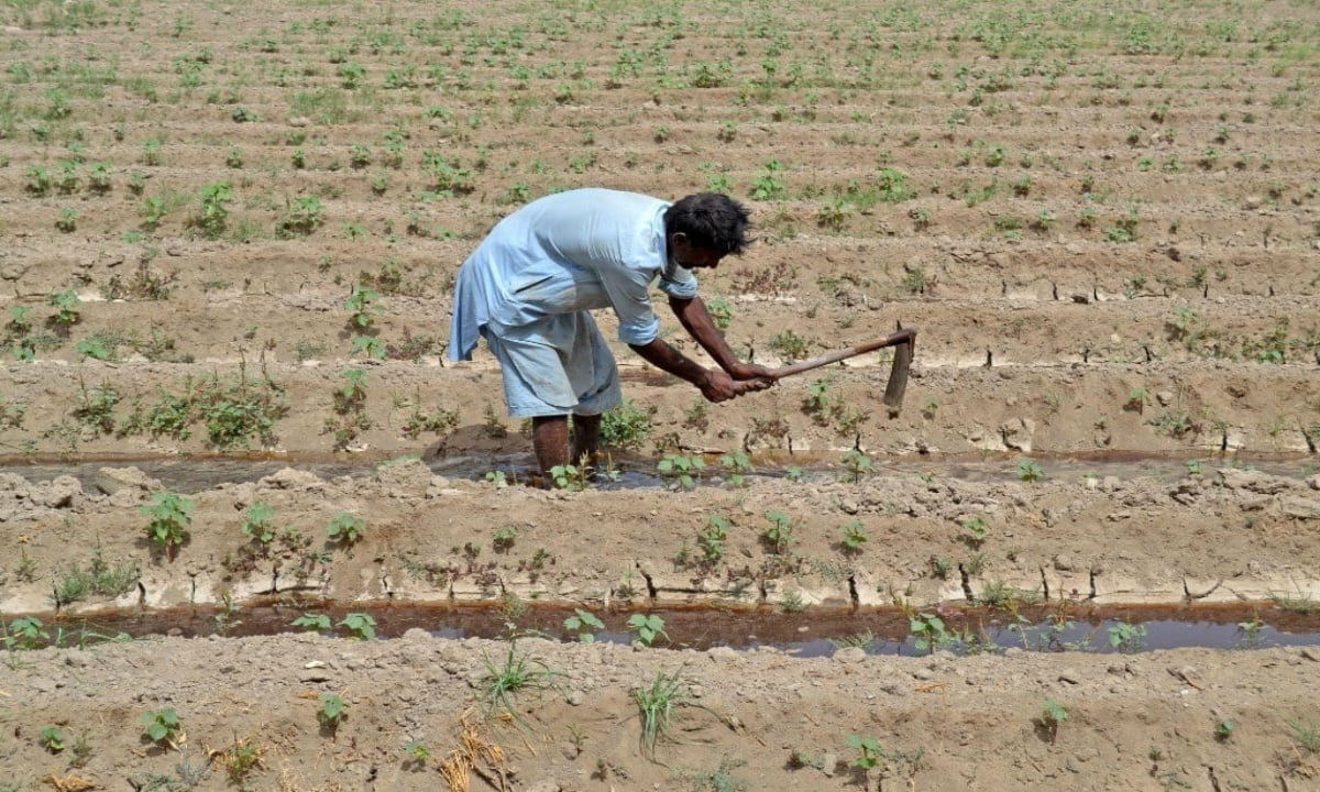 Why there is a shortage of irrigation water in Sindh