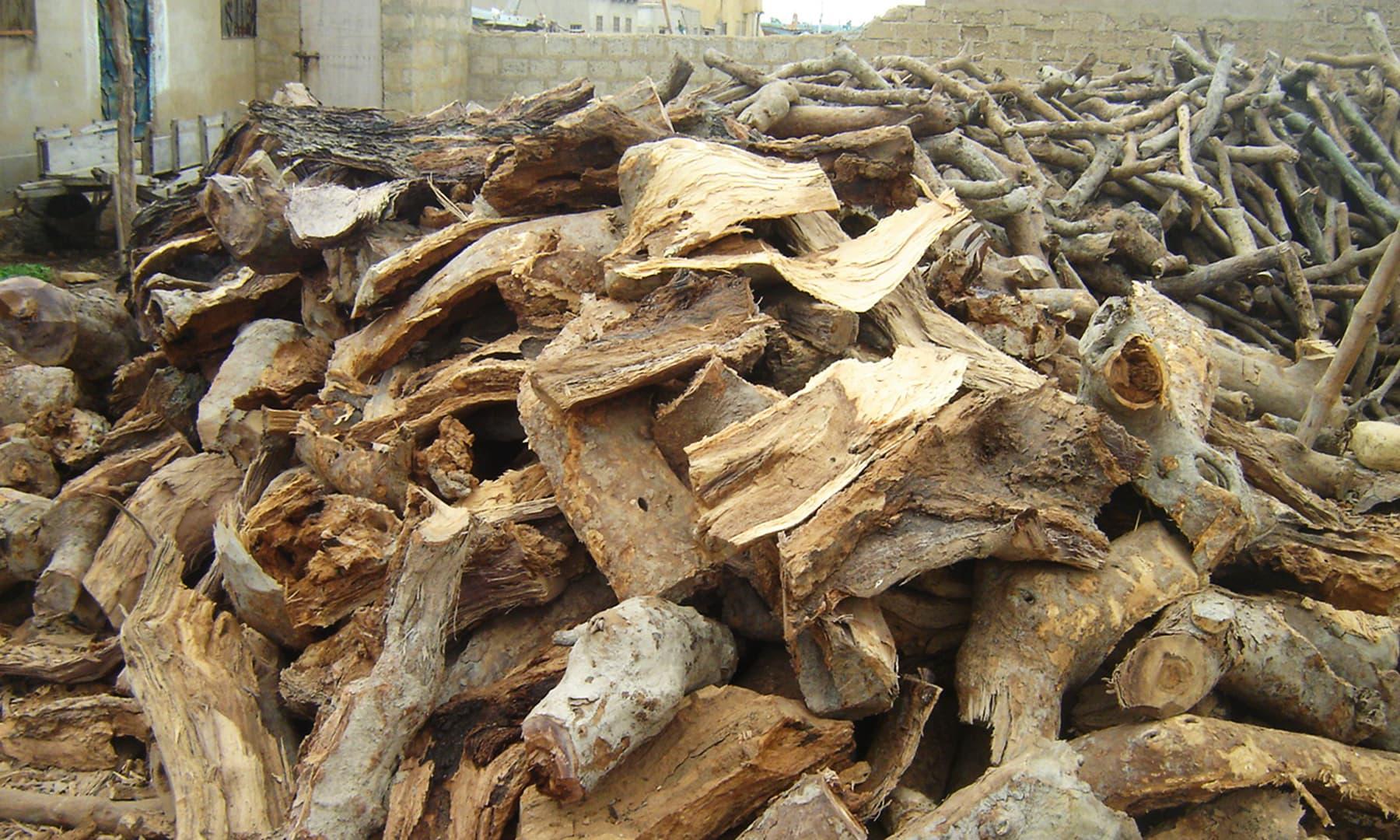 تمر کی کاٹی گئی لکڑیاں—تصویر ابوبکر شیخ