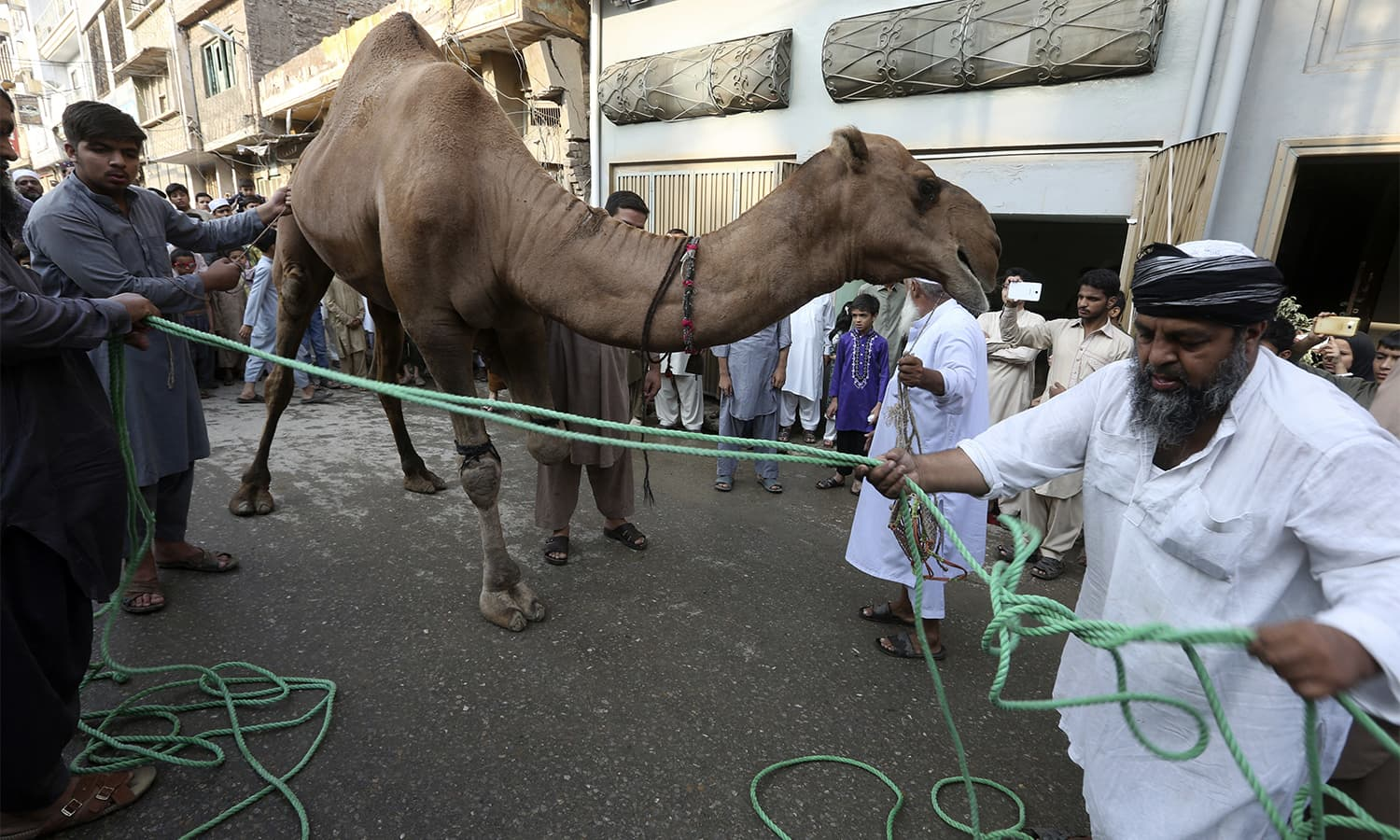 People prepare to slaughter a camel on the first day of Eidul Azha in Karachi, Pakistan.—AP