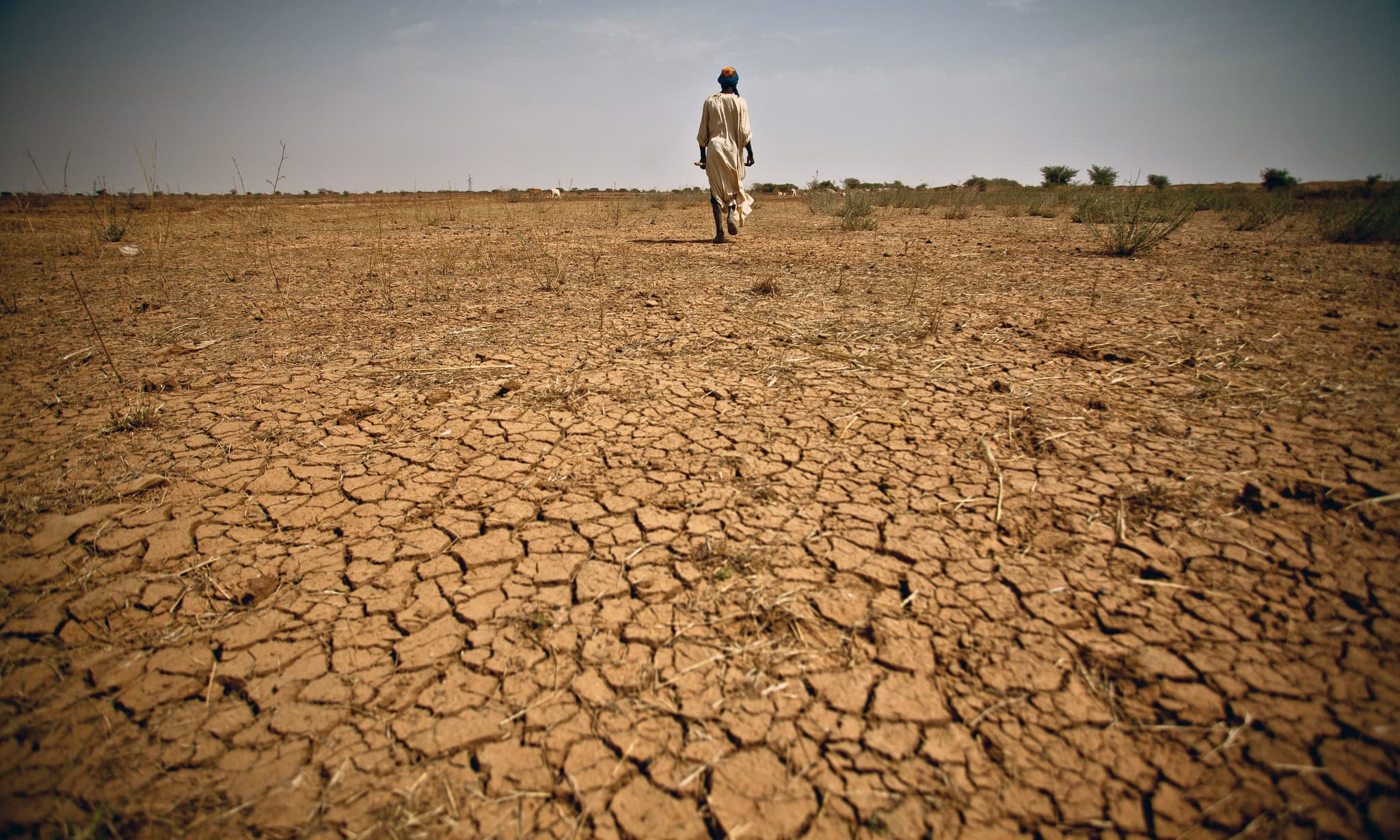 'Half of Balochistan gripped by drought'