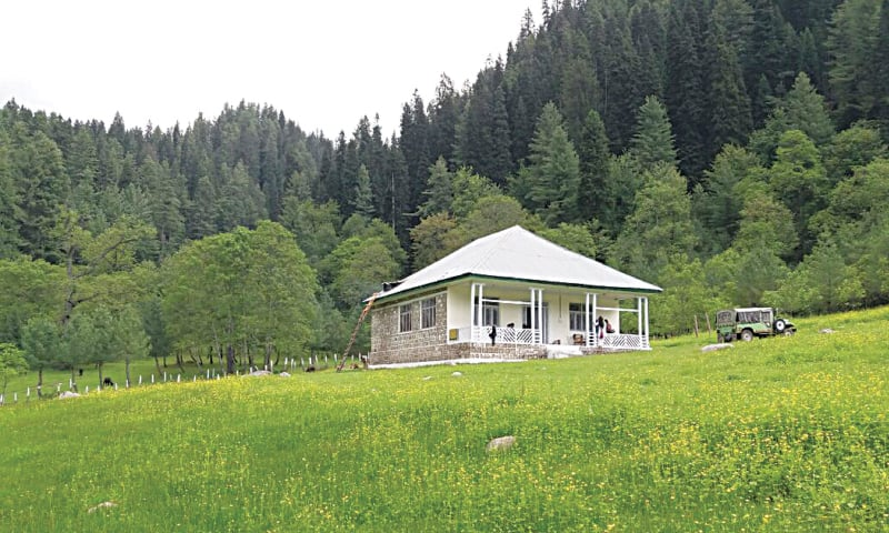 At the Manoor conserve, a tiny hut is the only thing you can spot in the middle of a buttercup field