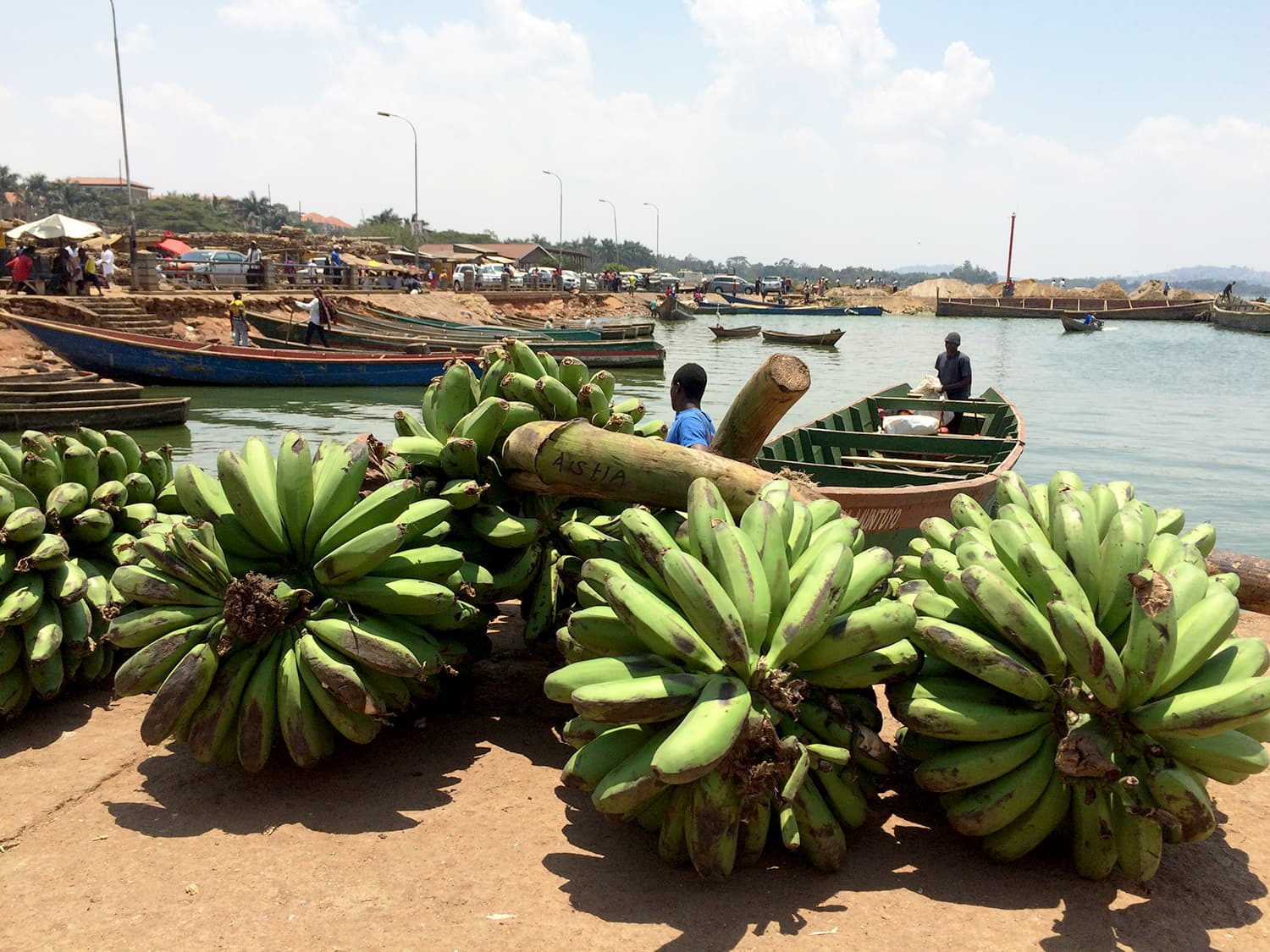 Visiting the magnificent Lake Victoria and discovering massive bananas.