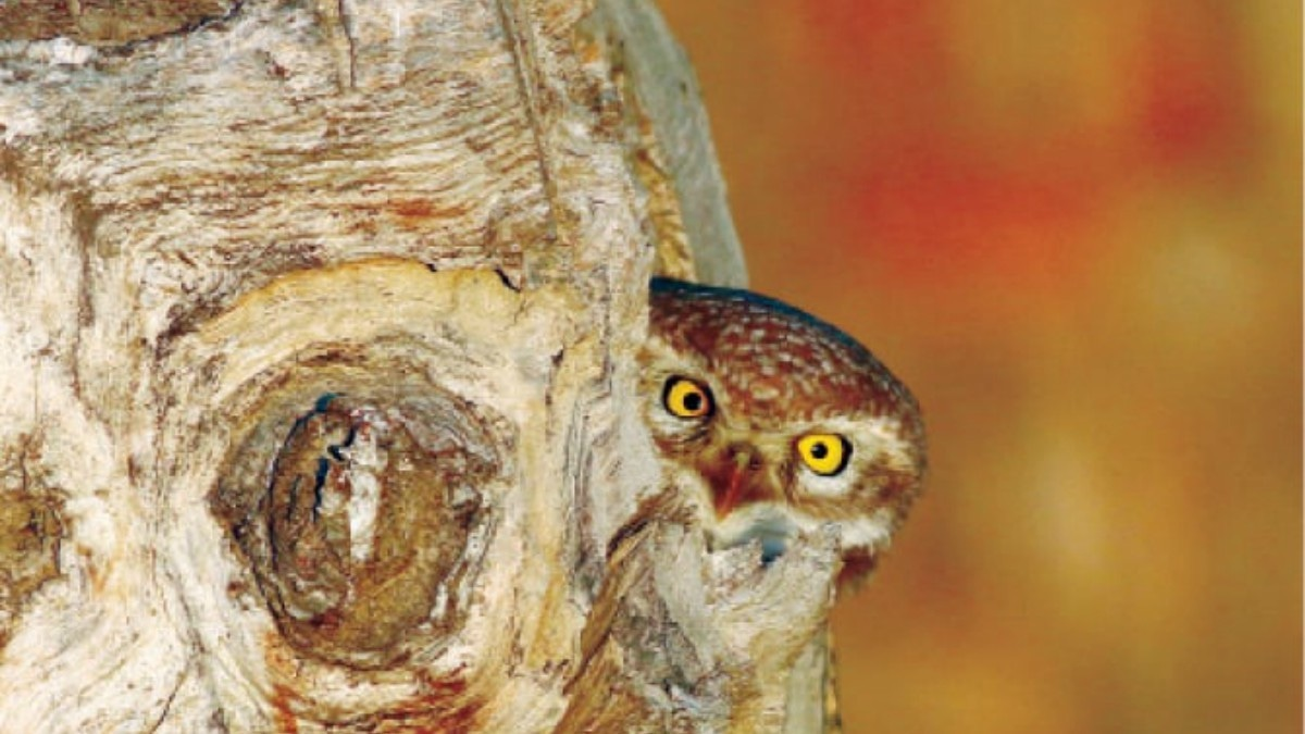 It is tough to wait for hours for a single click of birds, says Tariq