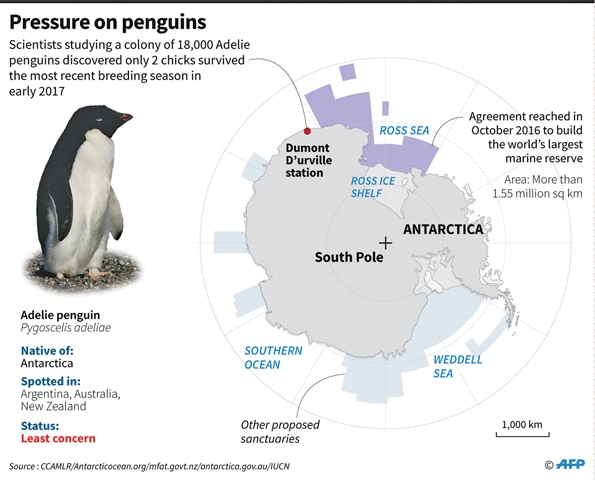 Starvation Claims Lives Of Thousands Of Penguins Newspaper Dawn
