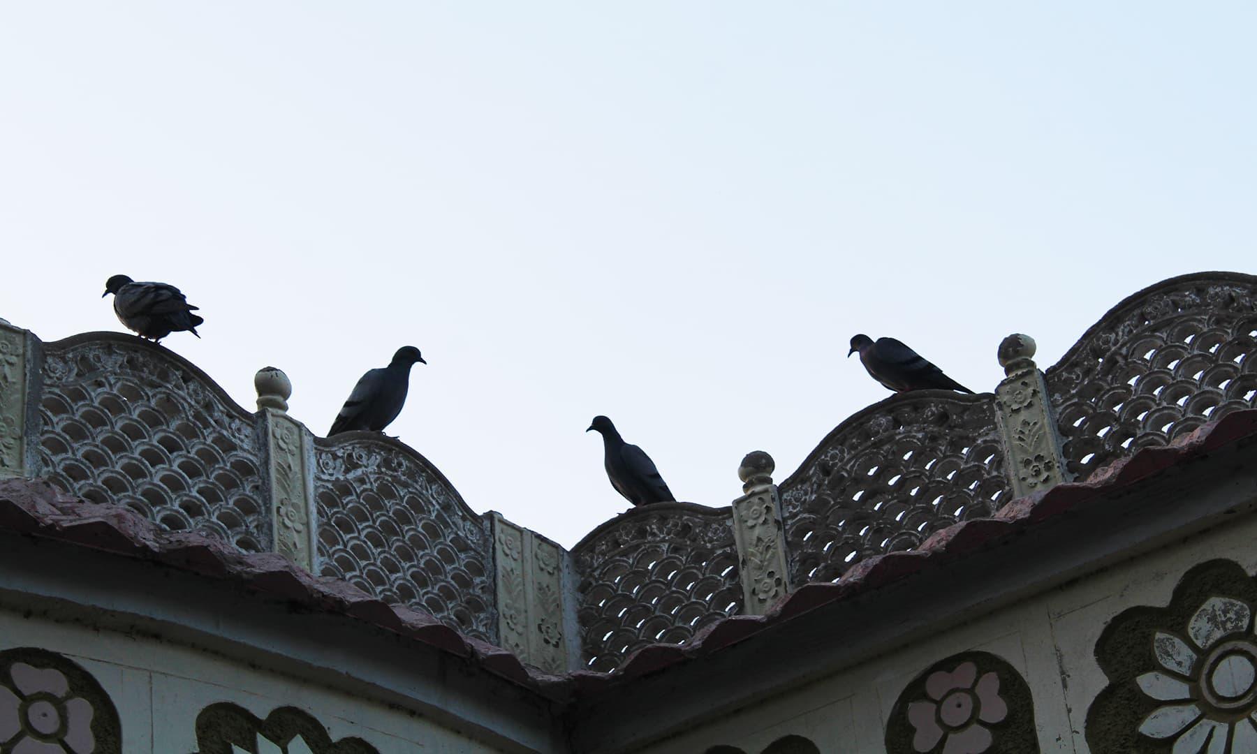 غلام حیدر کے مہمان خانے کے آزاد پرندے—تصویر اختر حفیظ