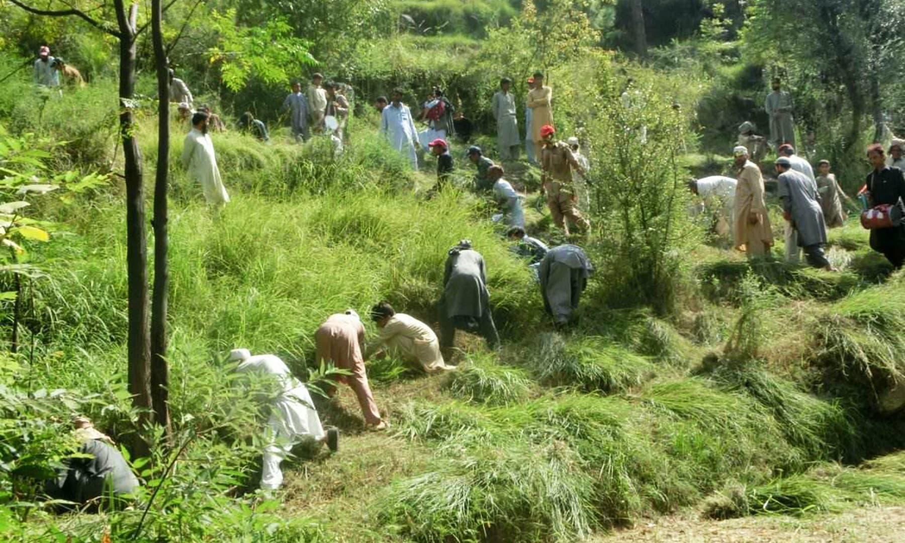 گھاس کٹائی کے اشر کے دوران لوگوں کے گروپ بن جاتے ہیں اور گھاس کٹائی کا مقابلہ شروع ہو جاتا ہے—تصویر نصیب یار