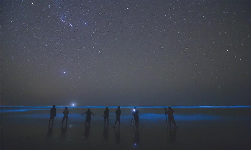 Visitors at Sapat Bandar Beach behold the phenomenon of bioluminescence, where waves appear to glow at night