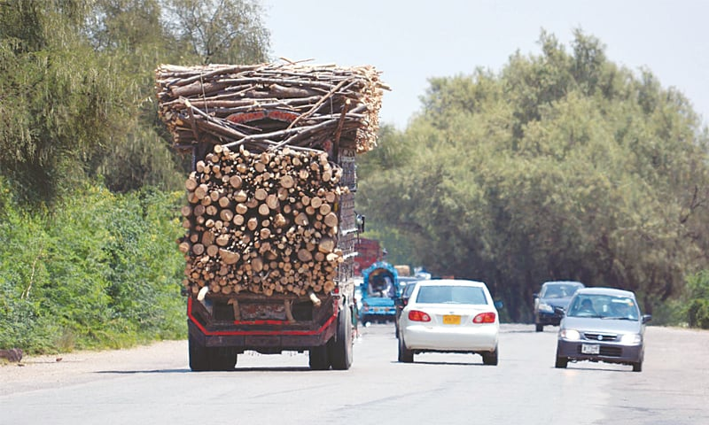 Logs being transported out of Gilgit-Baltistan | Abbas Mushtaq