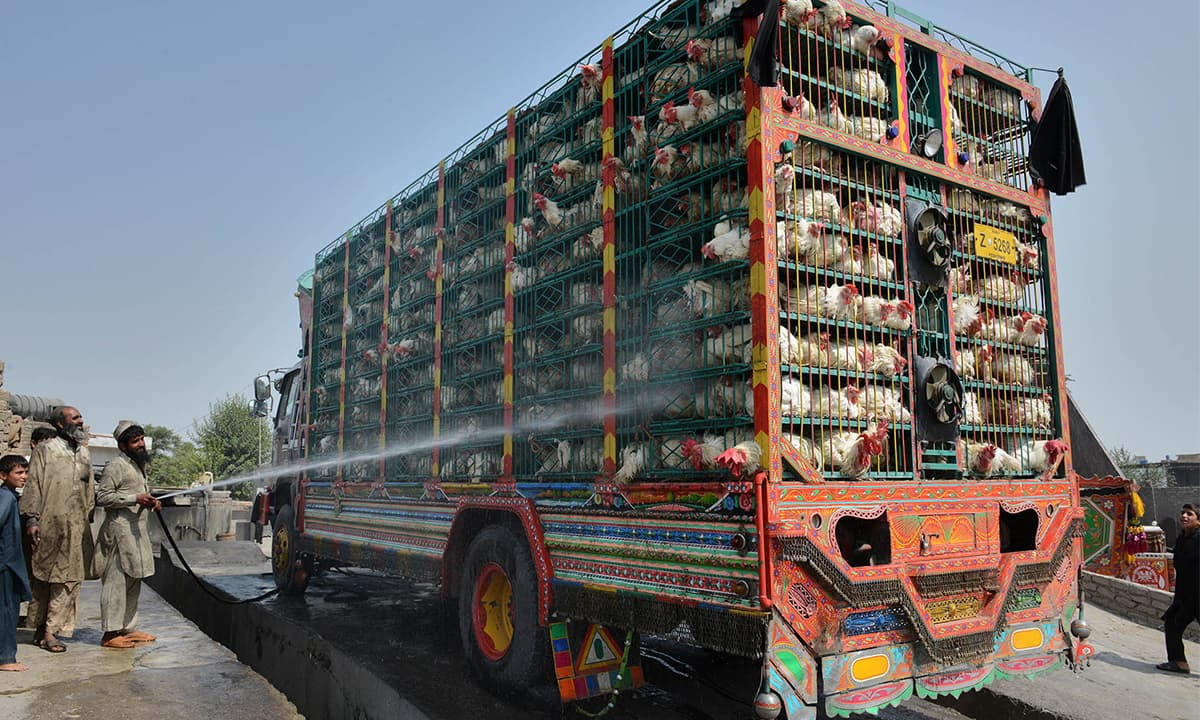 Chickens being sprayed with water in Peshawar to protect them from the heat during transportation | Abdul Majeed Goraya, White Star