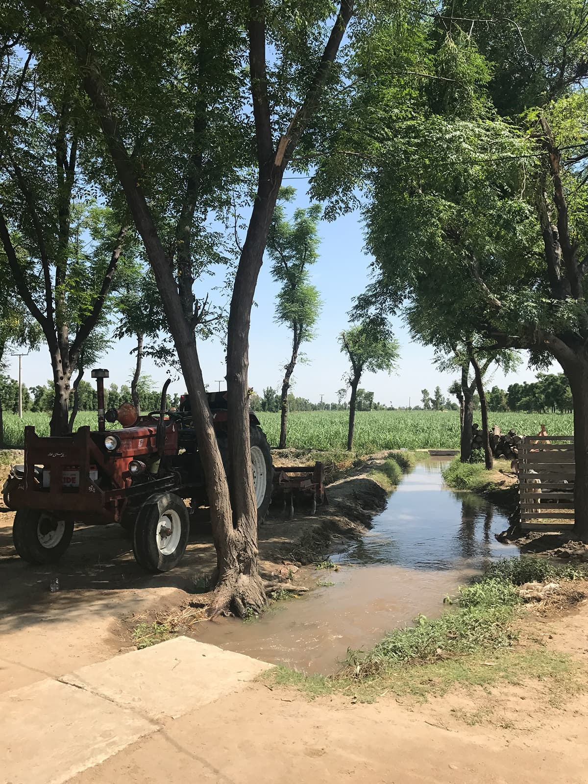 Farmland in Chak Jhumra, Punjab | Ayesha binte Rashid