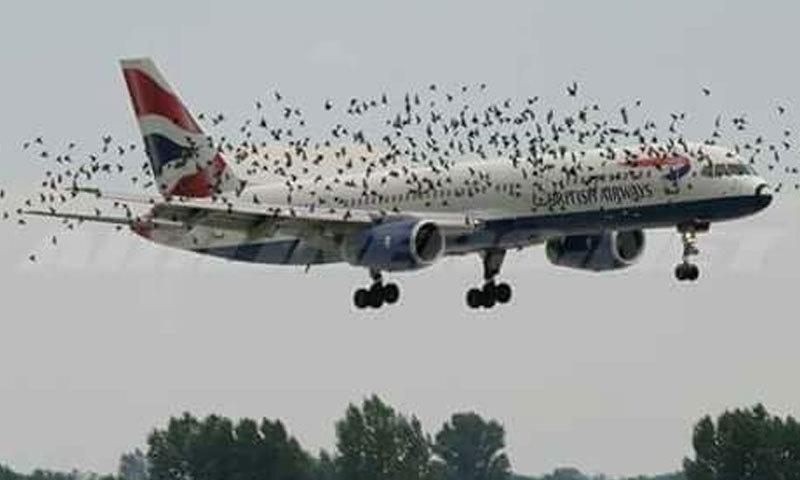 تین دن قبل بھی برٹش ایئر ویز کے جہاز کو پرندوں کی وجہ سے اتار لیا گیا تھا—فوٹو: ایننجیا ڈاٹ کام