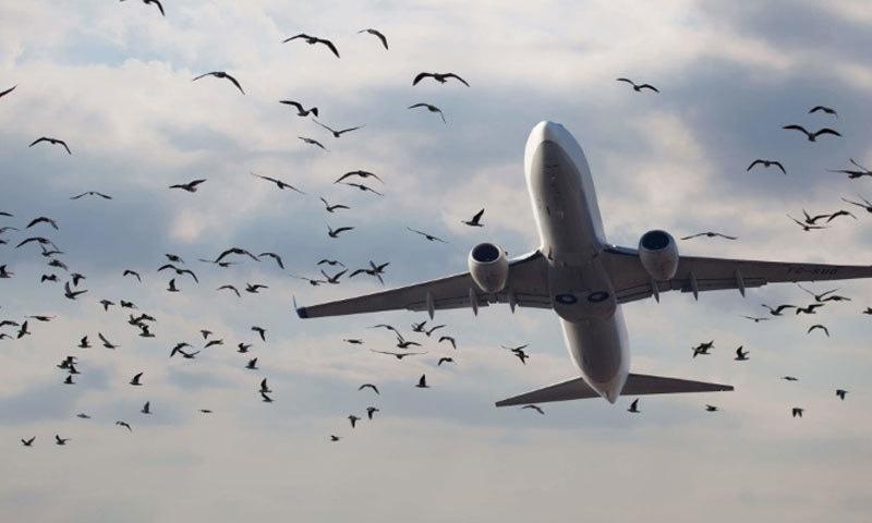 پرندوں کے باعث ہونے والے حادثات سے ایوی ایشن کو سالانہ 90 ارب روپے کا نقصان ہوتا ہے—فوٹو: ایوی ایشن وائس
