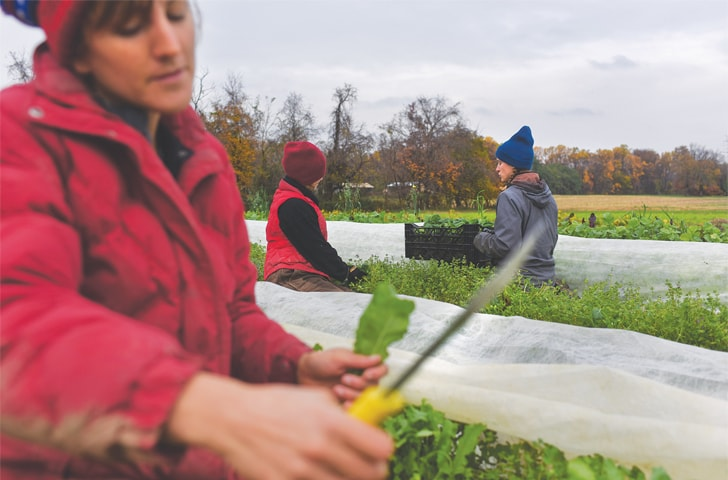 FROM left, Liz Whitehurst, Rachel Clement and Foster Gettys pick and weigh greens at Owl's Nest Farm on Nov 9.—Washington Post