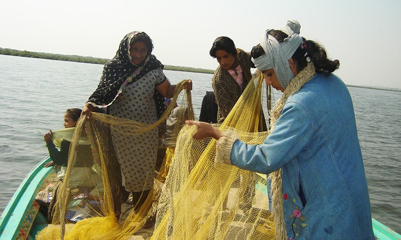 قطرہ اور بھولو گجو جیسے نقصان دہ جالوں سے مچھلی کا شکار کرنے سے مچھلیوں کی افزائش بُری طرح متاثر ہوئی ہے