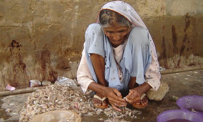 پاکستان میں جھینگوں کی 25 اقسام پائی جاتی ہیں—تصویر پاکستان فشر فوک فورم