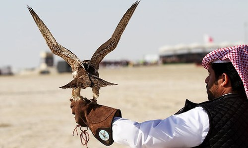 Four Arabs among eight arrested for illegal hunting of houbara bustard