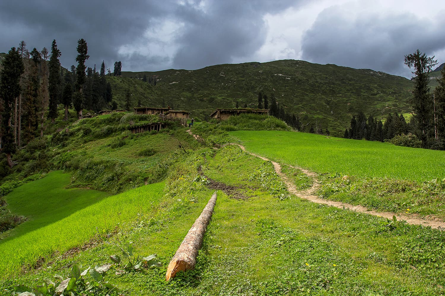 The meadows in Araam Gali.