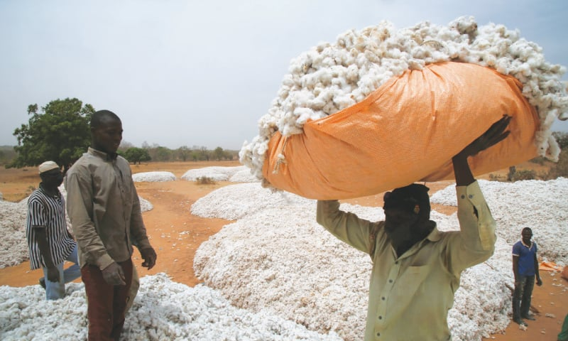 How Monsanto's GM cotton sowed trouble in Africa