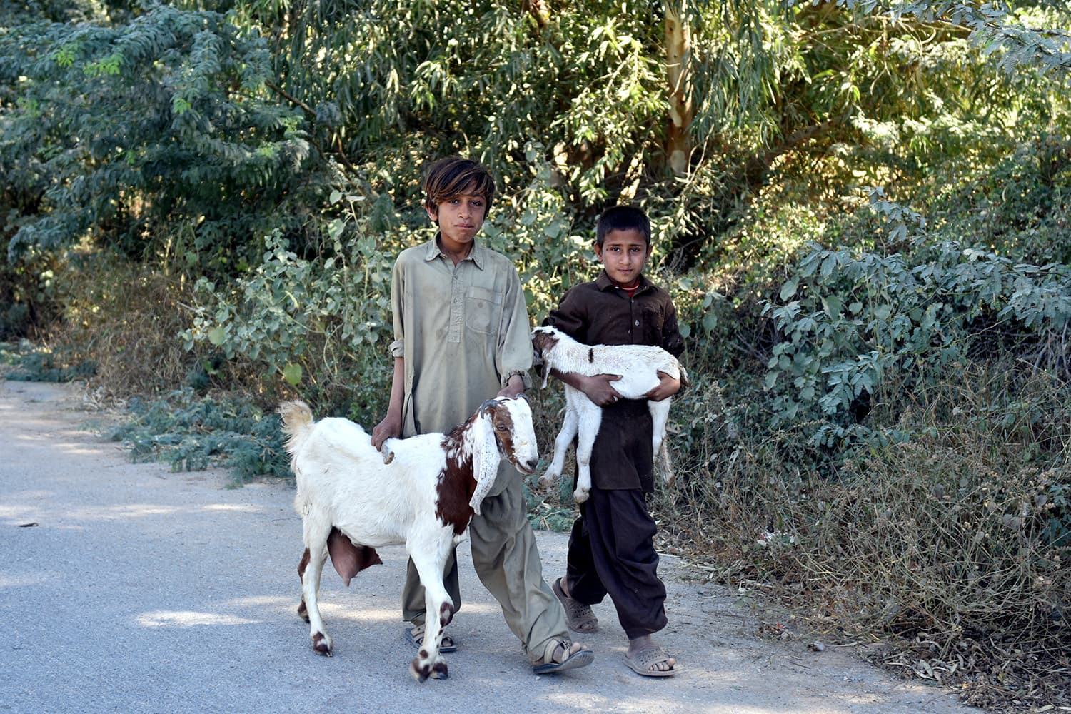 Livestock rearing is a major source of income. — Fahim Siddiqui/White Star