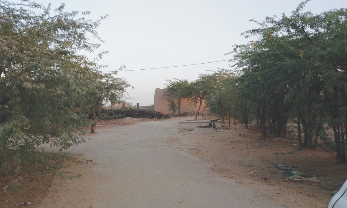 The road leading to Ameeran's house in Kharooro Charan, Umerkot.