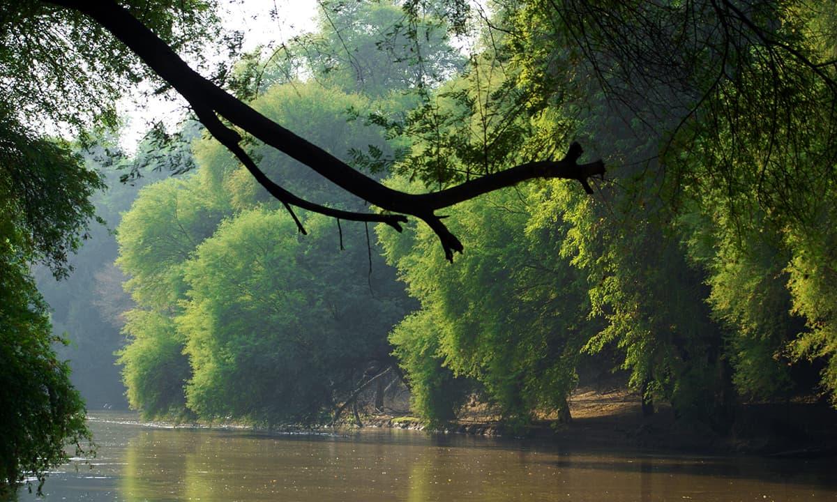 لال سوہانرا نیشنل پارک میں تھل نہر۔— فوٹو عبیداللہ کیہر