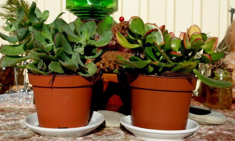 Balance pot and plant size