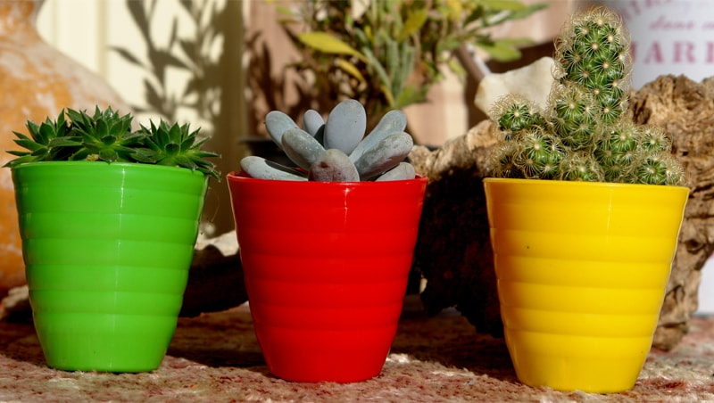 Small plants in small pots | Photos by the writer