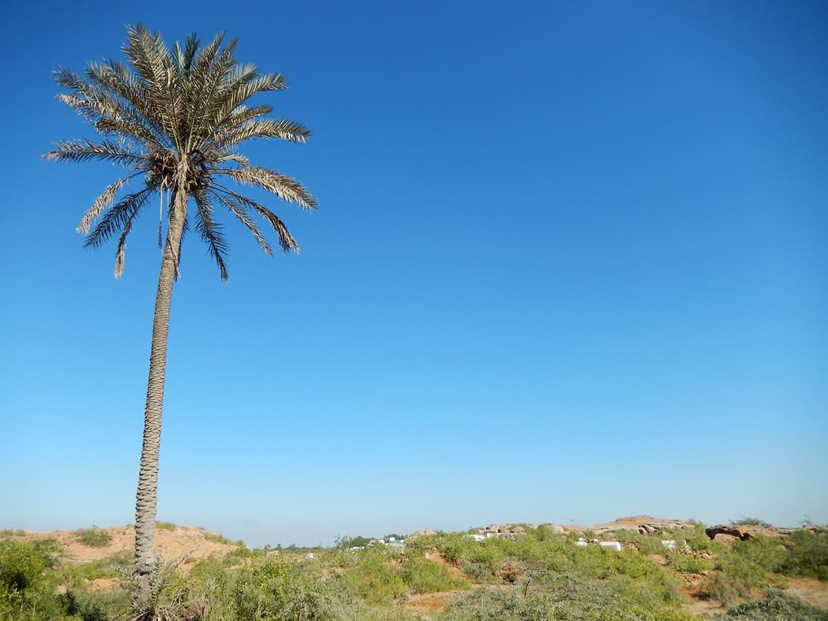 کلوٹا جزیرہ— فوٹو ابوبکر شیخ
