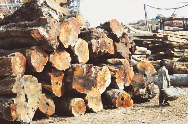 LOGS for building boats.—White Star