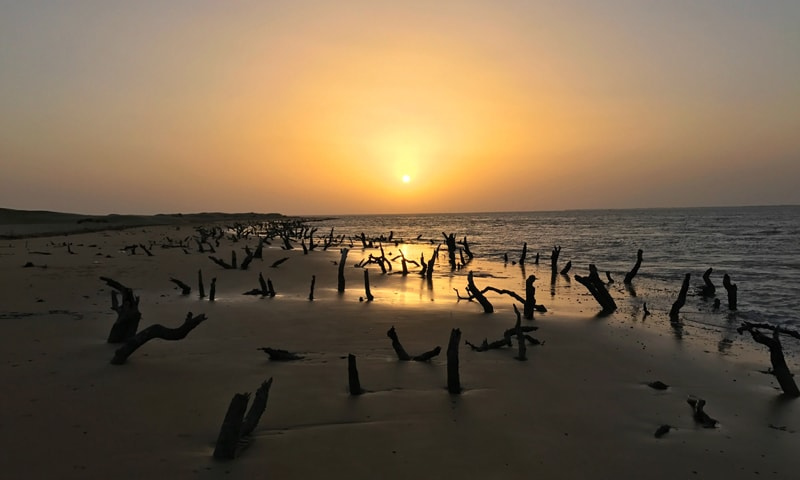 The remains of chopped down mangroves stand like ghosts | Zahid Younus