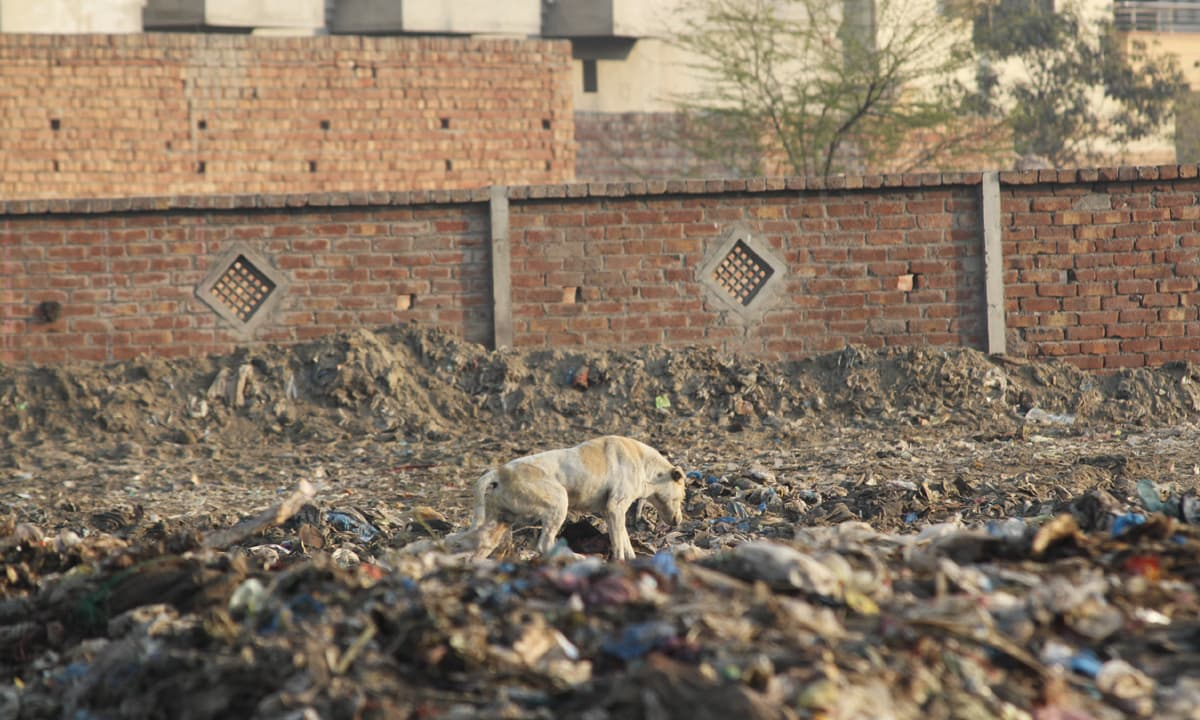 A dog rummages through rubbish in the garbage dump in which Zainab's body was found | Feryal Ali Gauhar