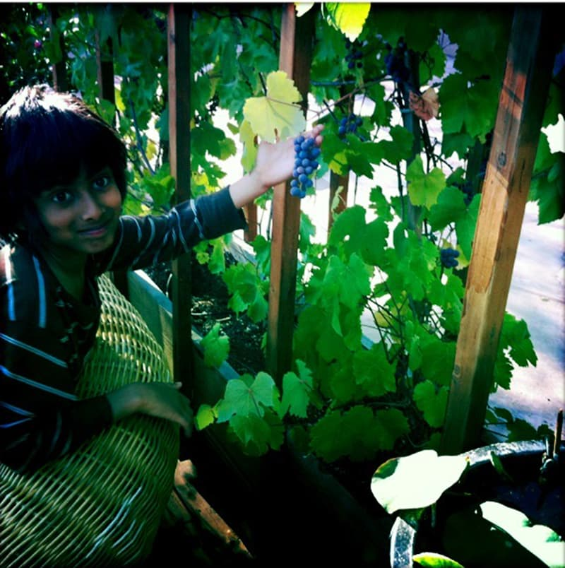 The author's son, Kabir, with a grape harvest behind the house.