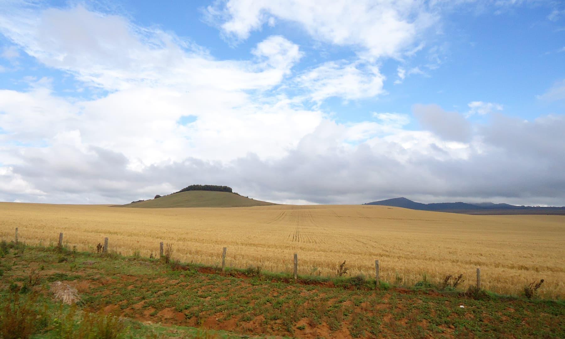 وسطی کینیا زیادہ تر پہاڑی علاقہ ہے۔ سرسبز اور شاداب کھیت یہاں کی خوبصورتی کو مزید دوبالا کرتے ہیں— فوٹو عظمت اکبر