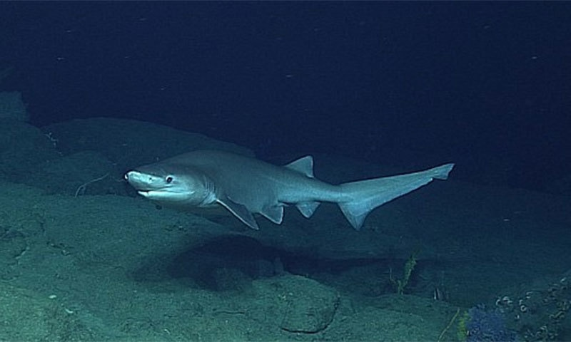 — فوٹو بشکریہ وکی میڈیا کامنز