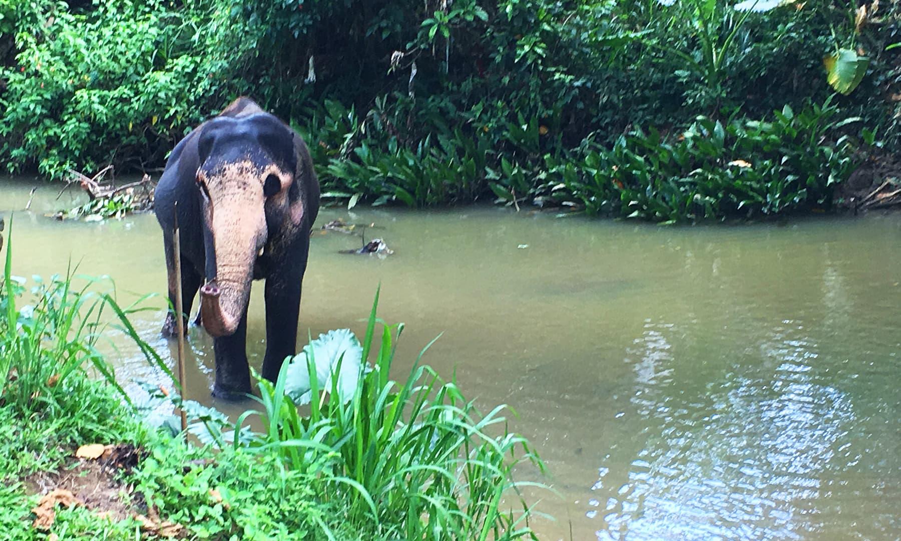 سری لنکا دنیا کا وہ واحد ملک ہے جس میں ایک ہی دن انسان ہاتھی اور بلیو ویلز دیکھ سکتا ہے—تصویر امتیاز احمد