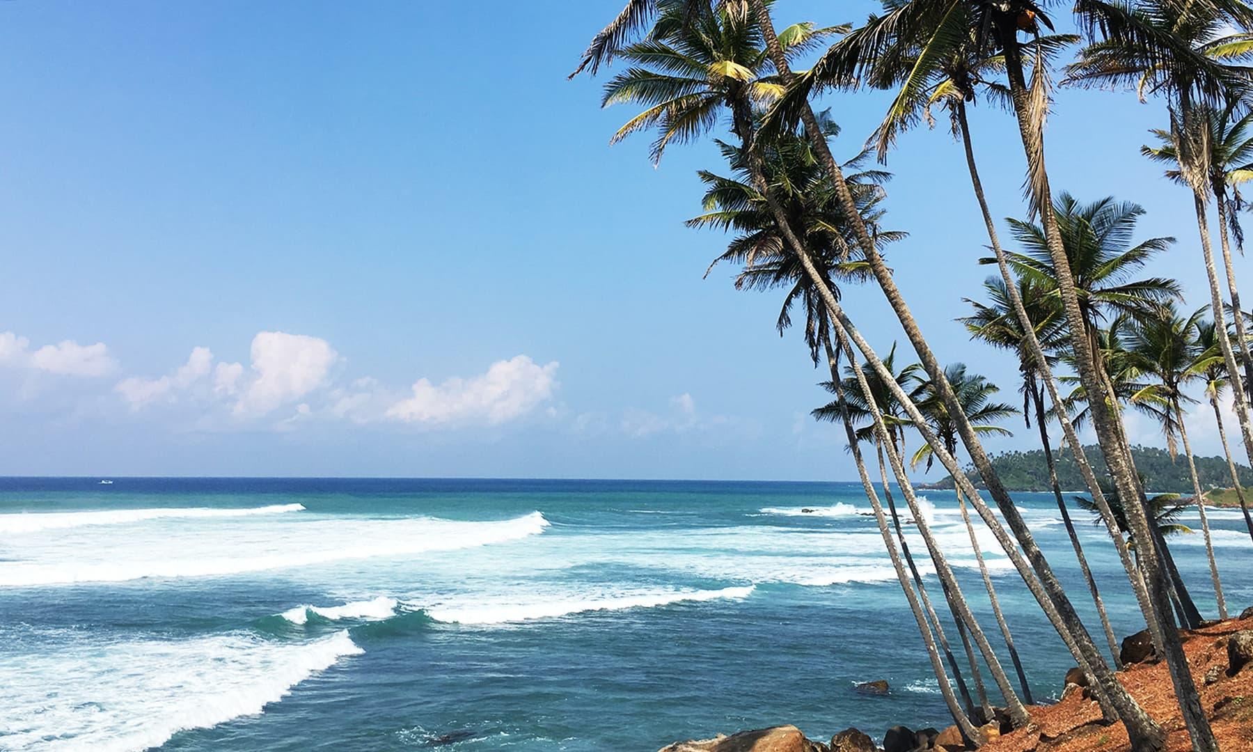 سمندری ہوا کے سازوں پر سر ہلاتے پپیتے، کیلے، ناریل اور پام کے درخت—تصویر امتیاز احمد