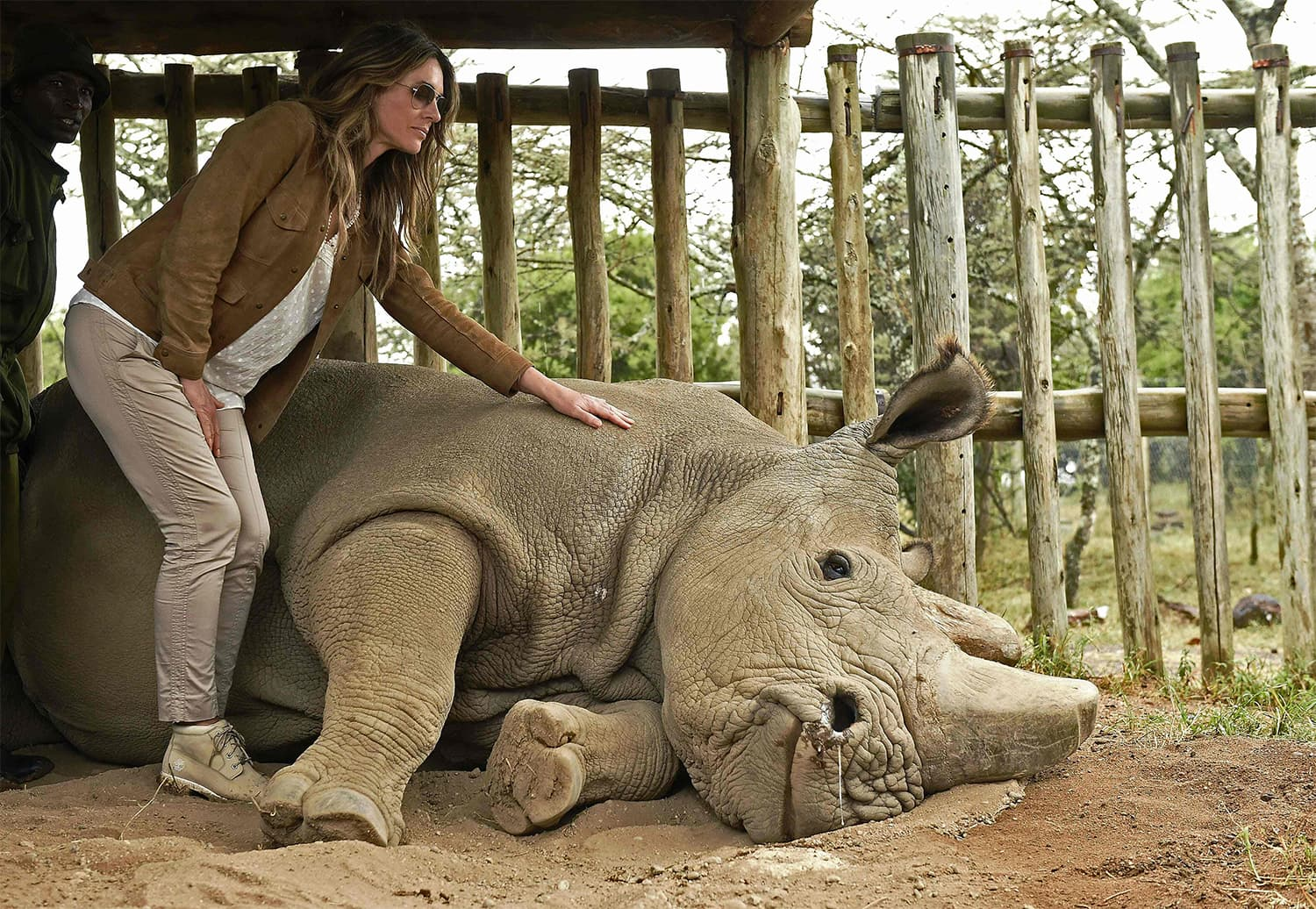 In this file photo taken on April 28, 2016, British actress Liz Hurley poses next to Sudan at the Ol Pejeta Sanctuary during the Giants Club Summit conservation meeting in Laikipia. ─ AFP