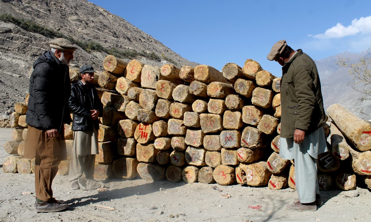 Timber being inspected for transport | Ghulam Dastageer