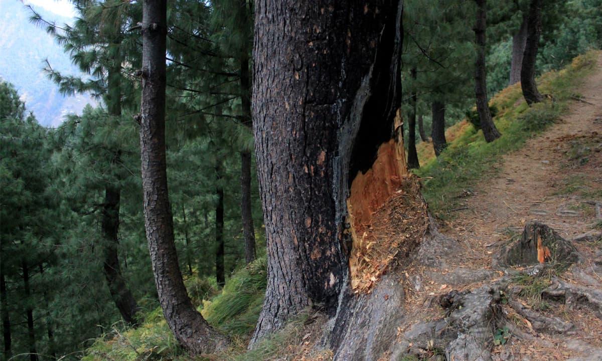 A forest in Galiyat | Danyal Adam Khan