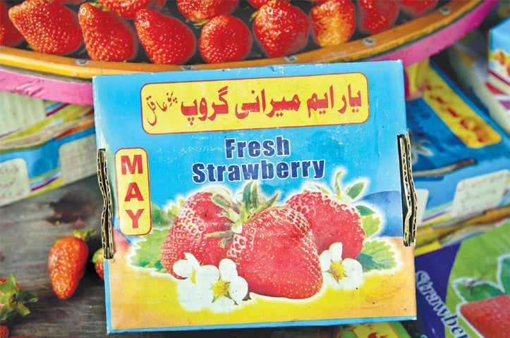 Strawberries in Sindh are mostly grown in Pano Akil, a tehsil of Sukkur district, as the box also mentions.