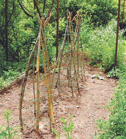 Wigwams for climbing beans