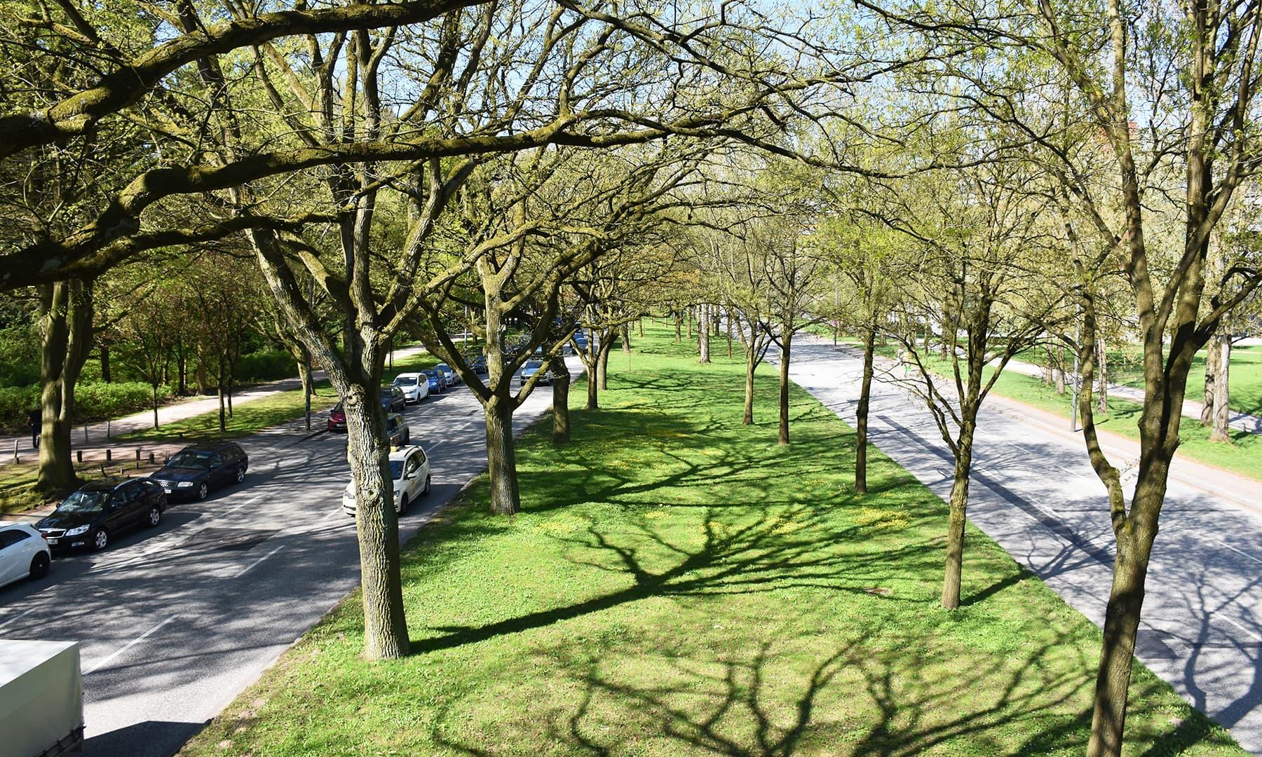 پارک کو جاتی سڑک کے درمیان موجود گرین بیلٹ—تصویر رمضان رفیق