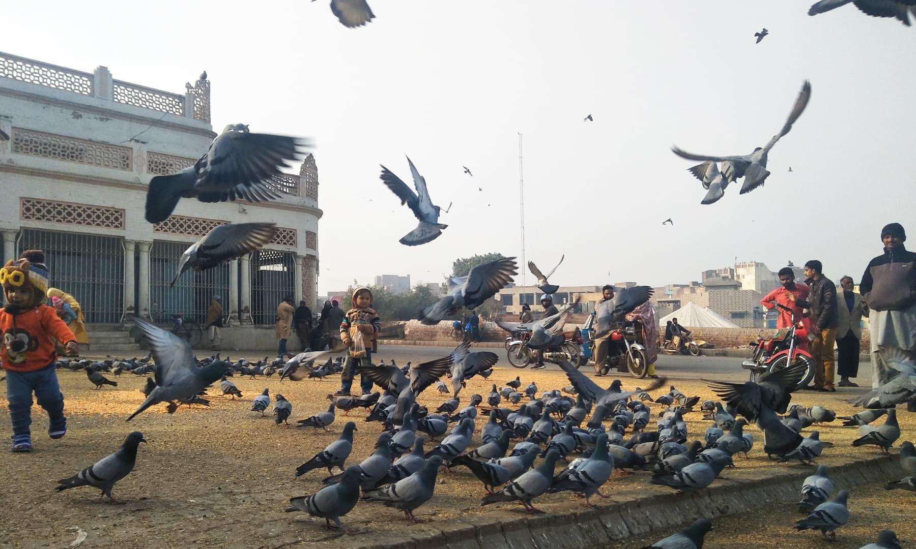 مزار کے باہر کبوتروں کے پرواز بھرنے اور پھر نیچے آکر دانہ چگنے کا سلسلہ تو جیسے ختم ہی نہیں ہوتا—تصویر عظمت اکبر