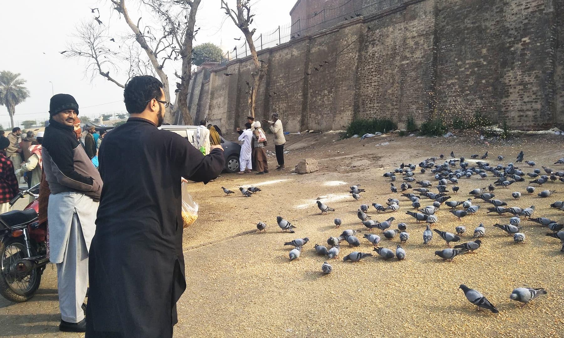 کبوتروں کو دانہ ڈالا جا رہا ہے —تصویر عظمت اکبر