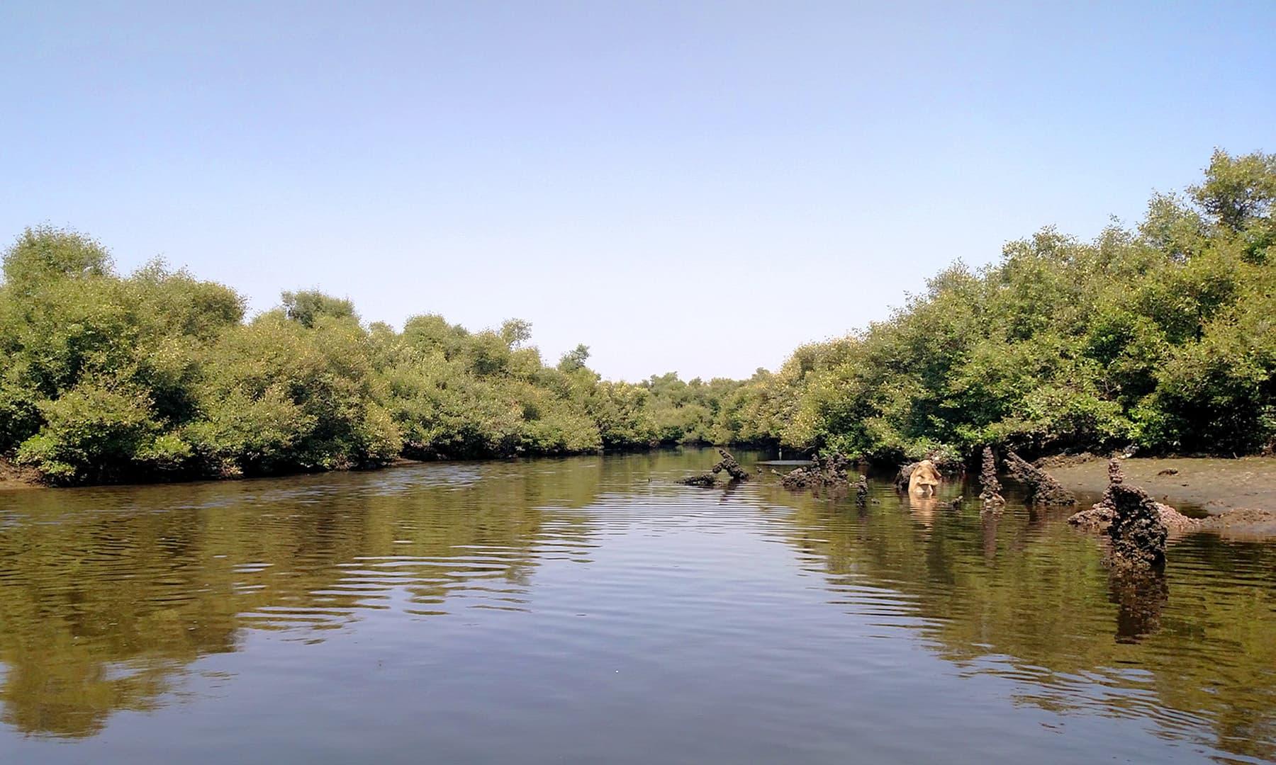 سینڈزپٹ کے ساحل کی دوسری جانب موجود پانی اور مینگرووز کے جنگلات — فوٹو بشکریہ لکھاری