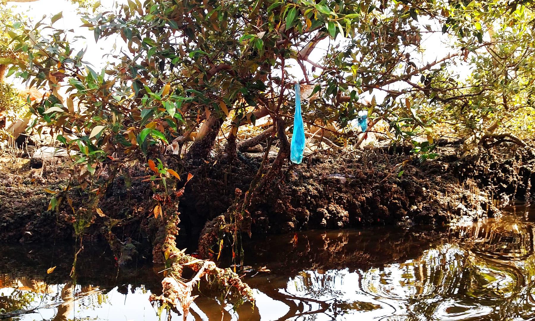 ایک درخت سے پلاسٹک کی تھیلی لٹک رہی ہے — فوٹو بشکریہ لکھاری