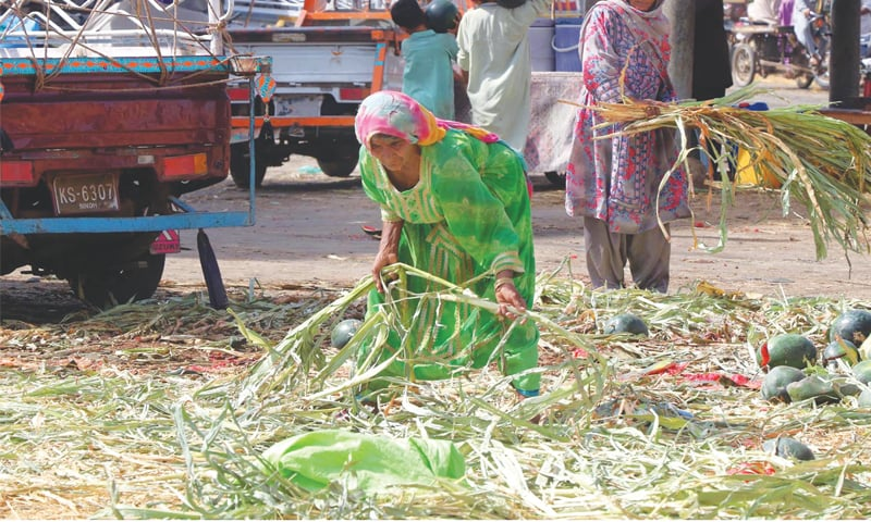 UNAWARE of what International Labour Day signifies, these women labourers are busy in work at  New Sabzi Mandi on Tuesday.—Online